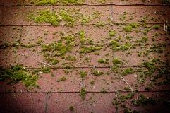 Dak met groen mos wordt behandeld dat Vers, groen, de lentevegetatie stock foto