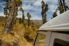 Dak van een auto tegen reusachtige bomen in Dehradun India wordt geschoten dat royalty-vrije stock fotografie