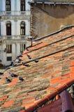 Dak in Venetië royalty-vrije stock foto's