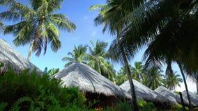 Dakbungalowwen en palmen in de Maldiven stock videobeelden