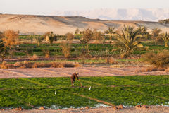 Dakhla,埃及- 2006年12月25日:工作在Dahl的领域 免版税图库摄影