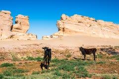Dakhla Oasis, Egypt Royalty Free Stock Images