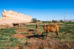 Dakhla oasis, Egypt Stock Photo