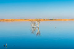 Dakhla Oasis, Egypt. Royalty Free Stock Photo