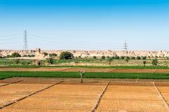 dakhlaegypt oas Royaltyfria Bilder