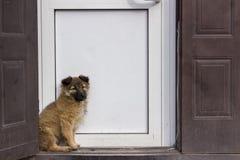 Dakloos, hongerig puppy met droevige ogen Royalty-vrije Stock Foto's