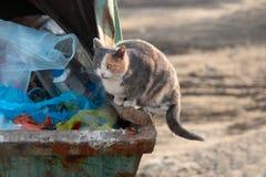 Dakloos kat het reinigen voedsel op afval dumpster Stock Foto's