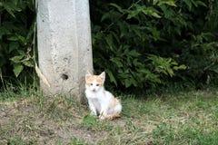 Dakloos katje buiten in het gras, de zomer concrete pijler stock afbeelding