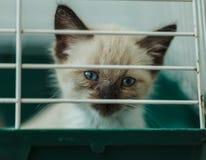 Dakloos katje in een kooi in een dierlijke schuilplaats Royalty-vrije Stock Afbeeldingen