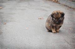 Dakloos puppy Stock Foto's