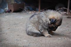 Dakloos puppy Stock Afbeelding