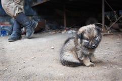 Dakloos puppy dichtbij mensenbenen Royalty-vrije Stock Afbeeldingen