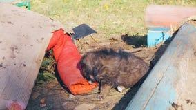 Dakloos puppy droevig bij de stortplaats stock videobeelden