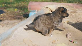 Dakloos puppyspel met mamma stock footage