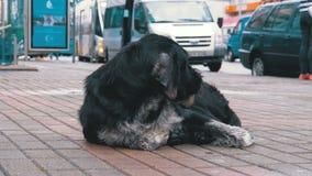 Dakloos Shaggy Dog ligt op een Stadsstraat tegen de Achtergrond van het Overgaan van Auto's en Mensen stock footage