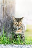 Dakloze drie-kleur kat Royalty-vrije Stock Afbeelding