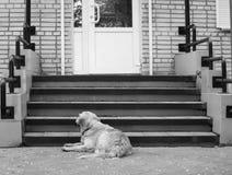 Dakloze grote hond dichtbij portiek van winkel stock afbeelding