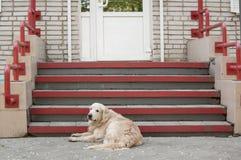 Dakloze grote hond dichtbij portiek van winkel royalty-vrije stock foto's