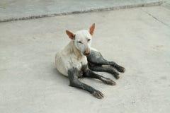 Dakloze hond Royalty-vrije Stock Afbeelding
