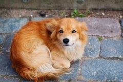 Dakloze hond Royalty-vrije Stock Foto