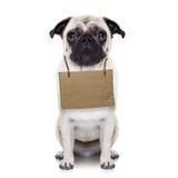 Dakloze hond Stock Foto's