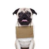 Dakloze hond Stock Foto