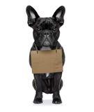 Dakloze hond Royalty-vrije Stock Foto's