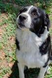 Dakloze hond Stock Fotografie