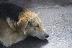 Dakloze hond Stock Afbeeldingen