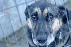 Dakloze hond in de schuilplaats Stock Foto's