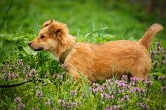 Dakloze hond die een huis zoeken Het probleem van dakloze dieren Puppy op de handen van een dierenarts Stock Fotografie