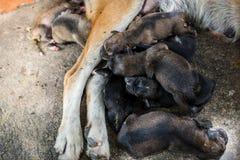 Dakloze hond en babyslaap op straat met flys en vlo op t stock foto's