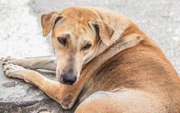 Dakloze hond openlucht Royalty-vrije Stock Foto