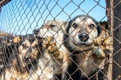 Dakloze hondschuilplaats Stock Afbeeldingen