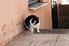 Dakloze kat bij het gebouw in de winter stock foto's