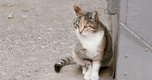 Dakloze kat die in de straat wachten die weg eruit zien stock footage