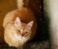 Dakloze kat die met groene ogen bij mensen staart. Royalty-vrije Stock Afbeeldingen