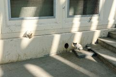 Dakloze katjes dichtbij het gat in de kelderverdieping op een stadsstraat stock foto