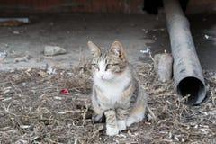 Dakloze katten Stock Foto