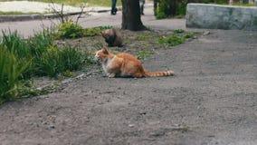 Dakloze katten voordien in gras stock videobeelden