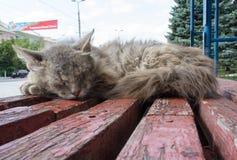 Dakloze kattenslaap bij een bushalte Stock Foto
