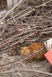 Dakloze, oranje verdwaalde kat die in een verlaten binnenplaats liggen stock foto