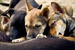 Dakloze puppy die melk zuigen Royalty-vrije Stock Fotografie
