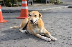 Dakloze Thaise hond aan wegkant Royalty-vrije Stock Afbeeldingen