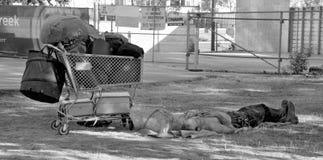 daklozen stock foto's
