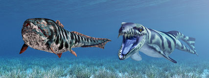 Dakosaurus attacks Dunkleosteus Royalty Free Stock Images