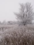 Dakota Prairie Winter Royalty Free Stock Image
