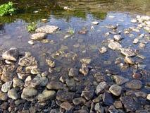 dakspaan, het water van rivierstenen, kei Royalty-vrije Stock Foto's