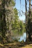 Dakspaankreek met mos gedrapeerde bomen in Kissimmee, Florida stock foto's