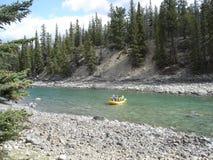 Dakspar in de rivier Royalty-vrije Stock Afbeeldingen